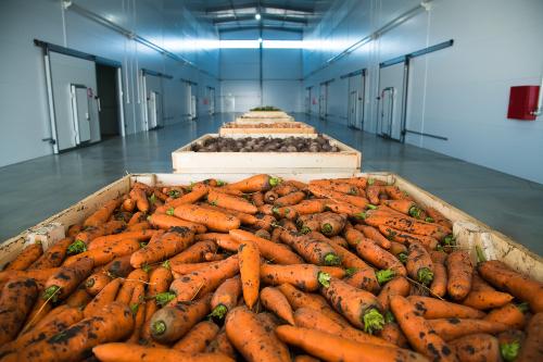 Sterowanie klimatem w chłodni przechowalniczej warzyw za pomocą sterownika LB-600