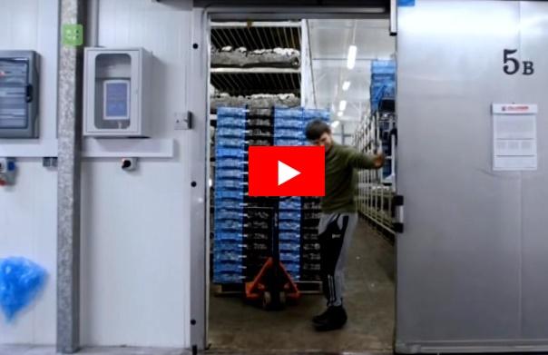 GL Group wykorzystuje w halach produkcji pieczarek kontrolery klimatu LB-762 LAB-EL